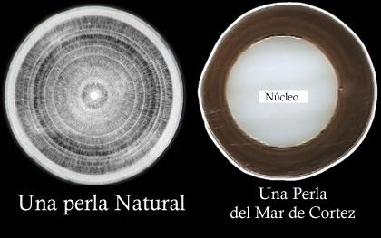 Naturperle vs. kulturperle